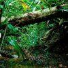 Dom Erwin: brasileiros devem voltar sua atenção para a Amazônia